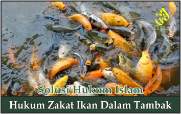 Hukum Zakat Ikan dalam Tambak