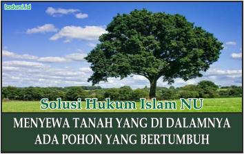 Hukum Menyewa Tanah yang di dalamnya Ada Pohon yang Bertumbuh