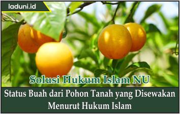 Status Buah dari Pohon Tanah yang Disewakan Menurut Hukum Islam