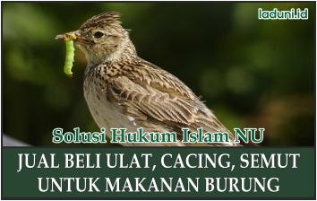 Hukum Jual Beli Ulat, Cacing, Dan Semut Untuk Makanan Burung