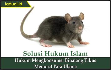 Hukum Mengkonsumsi Binatang Tikus Menurut Para Ulama