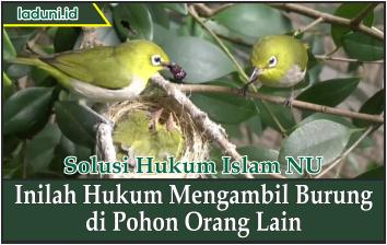 Inilah Hukum Mengambil Burung di Pohon Orang Lain