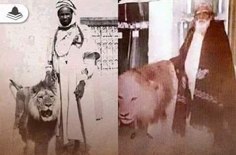 Kisah Murid Syeikh Abdul Qadir Jailani dan Seekor Singanya