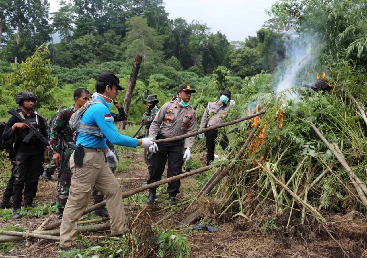 BNN Musnahkan 1 Hektar Lahan Ganja di Aceh Besar