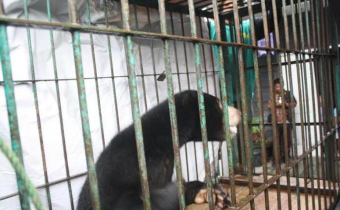 Polres Aceh Barat Gagalkan Perdagangan Satwa Langka