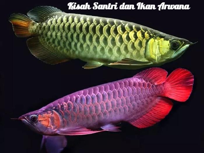 Kisah Seekor Ikan Arwana dengan Santri dan Kyainya