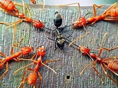 Invisible Hand's dan Kisah Semut yang Saling Bunuh