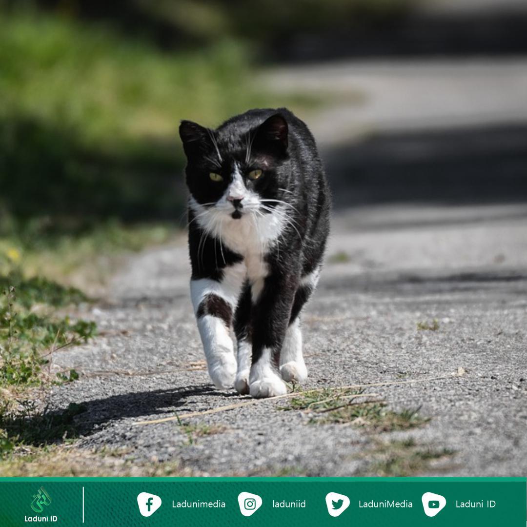 Kisah Jenazah yang Diantar Ratusan Kucing