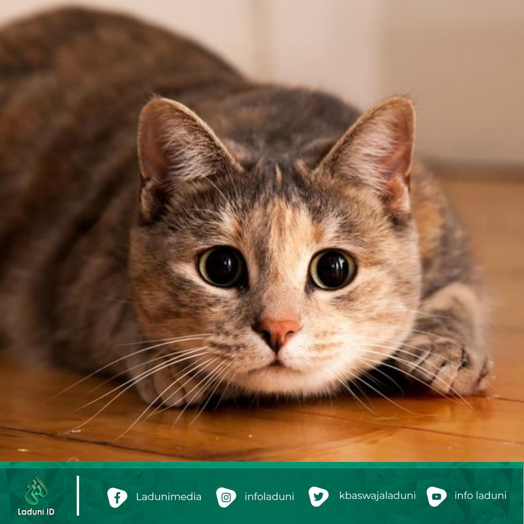 Ingin Memelihara Kucing? 14 Ras Kucing Ini Mungkin Bisa Jadi Pertimbangan Kamu!