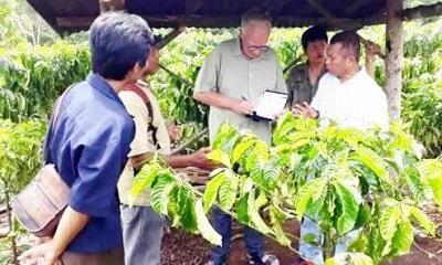 Kopi Organik Lahat Berpotensi Saingi Kopi Brazil dan Kolombia