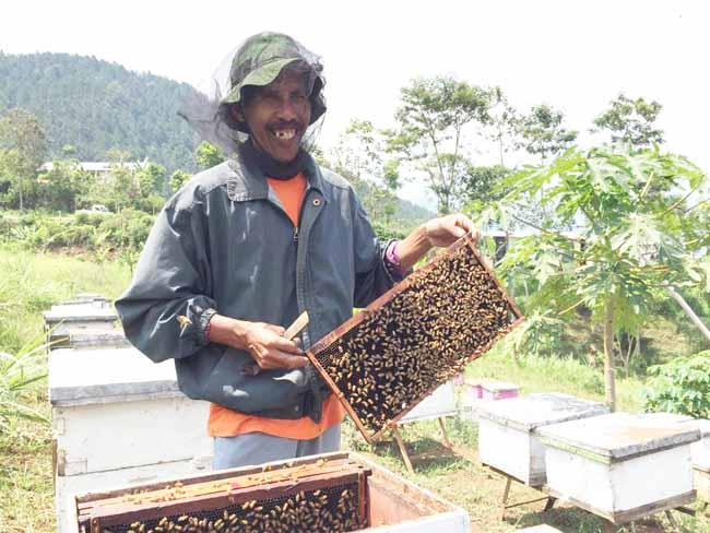 Unik, Wisata Lebah Ini Bakal Bikin Wisatawan Mendapat Ilmu Budidaya Madu
